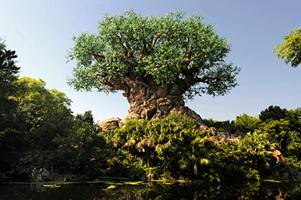 Animal Kingdom Date Night Ideas Disney